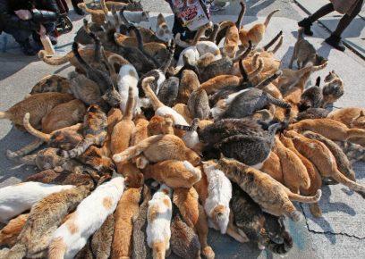 Кошки на Таширодзиме