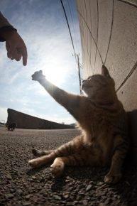 Приветствие кота