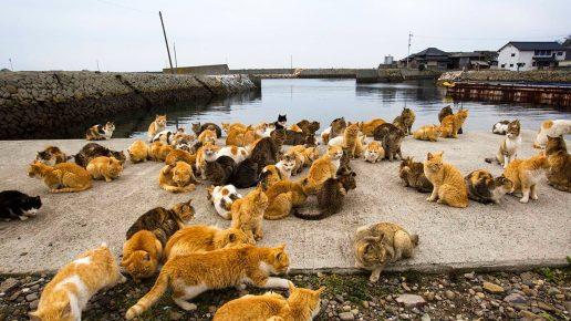 Кошки на пирсе