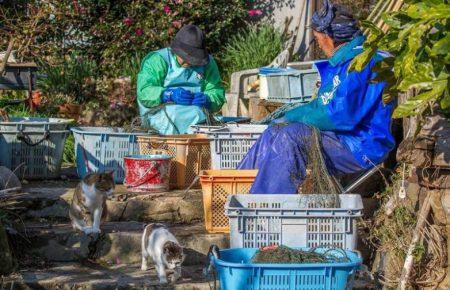 Кошки и рыбаки