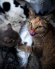 Кошки за трапезой