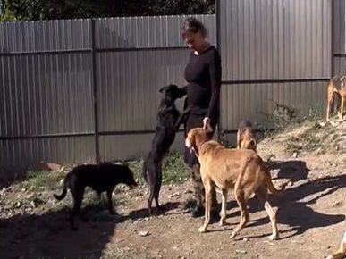Анна помогает бездомным животным уже 10 лет