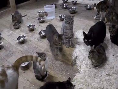 Анна помогает бездомным кошкам, но пристраивает редко