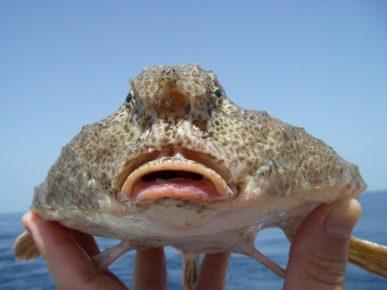 Рыба, которая не умеет плавать