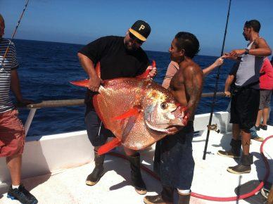 теплокровная рыба