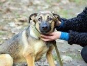 Рождена, чтобы помогать бездомным животным