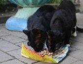 Котошев в городе котов