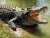 В парке Крюгера крокодил убил леопарда