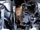 Котёнок проехался под машиной и выжил