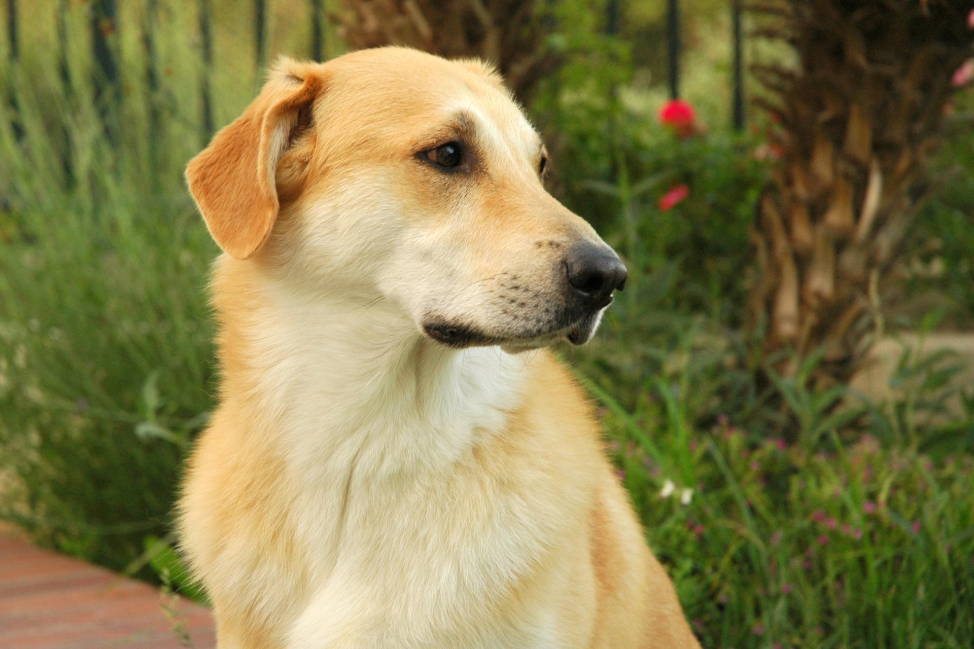 Породы собак картинка