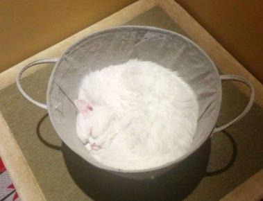 Кот замаскировался под тесто