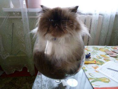 Кот в бокале вместо вина