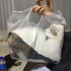 А в пакете мягче