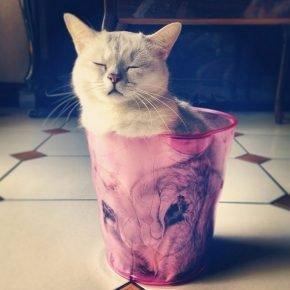 Кот вместо цветов