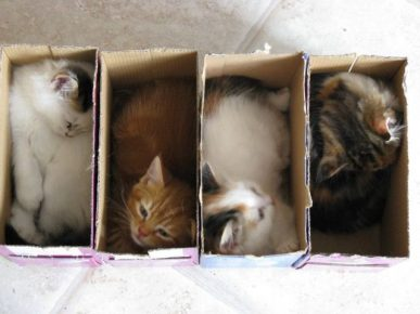 Разлив котят по коробочкам