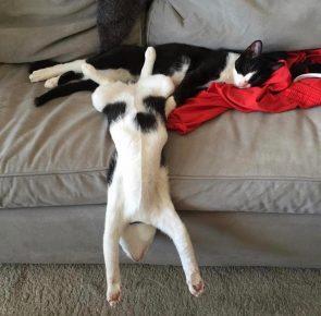 Кот стекает с дивана