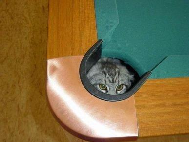 Кот в лузе
