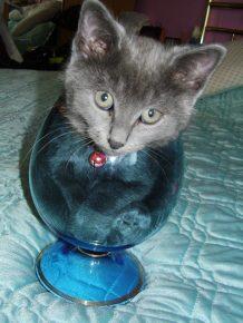 Кот в бокале