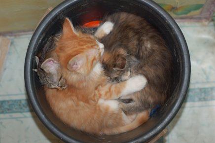Коты в чашке