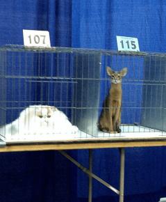 Кот растаял