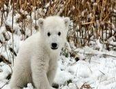 Медвежонок месяц бродил в поисках мамы и еды