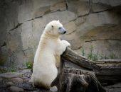 Белый медвежонок обрёл дом