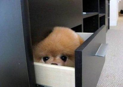 Собачка в ящике