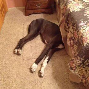 Собака под кроватью