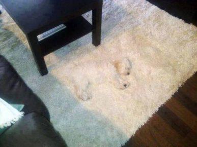Мимикрия собаки