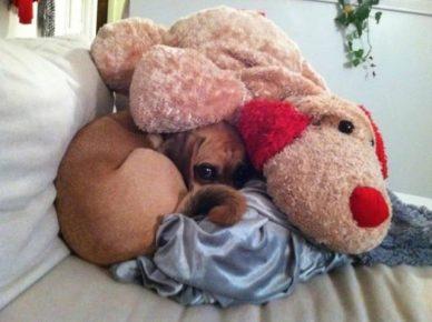 Собака — мягкая игрушка