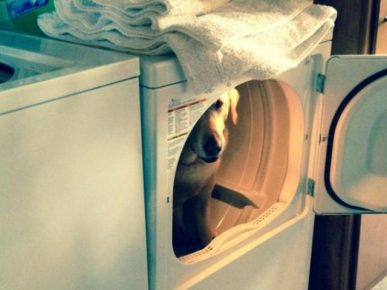 Собака в стиральной машине