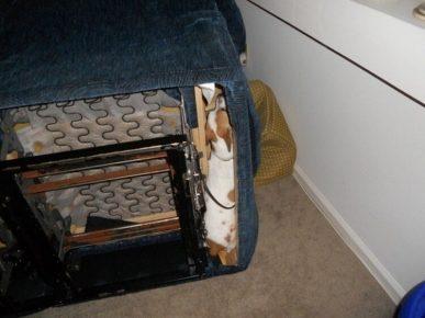Собака спряталась в кресле