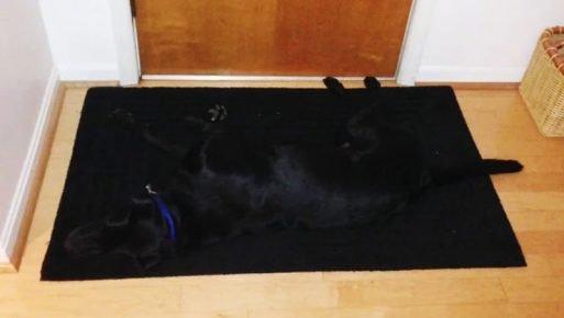 собака слилась с ковриком