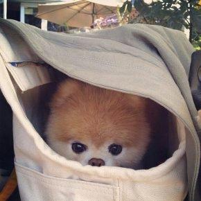 Собака спряталась в корзинке