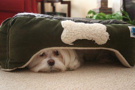 Собака спряталась под лежанкой