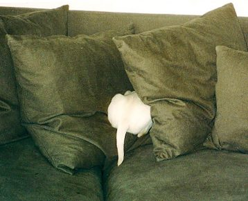 Собака в подушках