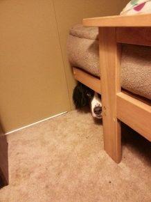 Собака прячется за кроватью