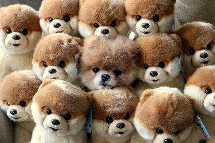 Собака прячется среди плюшевых игрушек