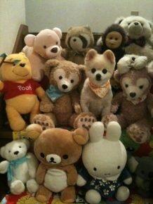Собака среди плюшевых игрушек