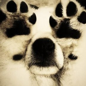 Собака играет в прятки