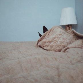 собака прячется под одеялом