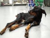 Москвичка спасает собак