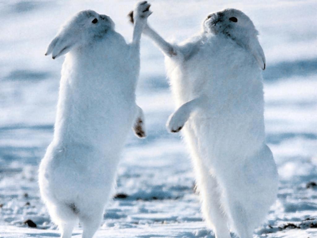 Гиф, картинки приколы арктика