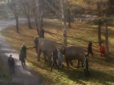 Слоны из цирка размяли косточки