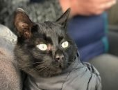 Если чёрному коту не повезёт