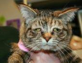 Депрессия у кошек — симптомы, причины, как помочь животному