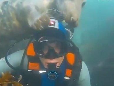 Тюлень пытается погладить по голове своего гостя