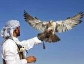 Праздник соколов в ОАЭ