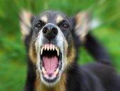 Собака вырвала у жительницы Тюмени кусок мяса из ноги
