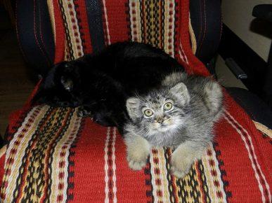 Даша с кошкой
